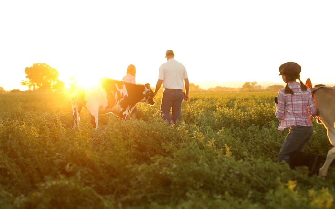 Dairy Farmers: The Truth Behind Family-Owned Farms