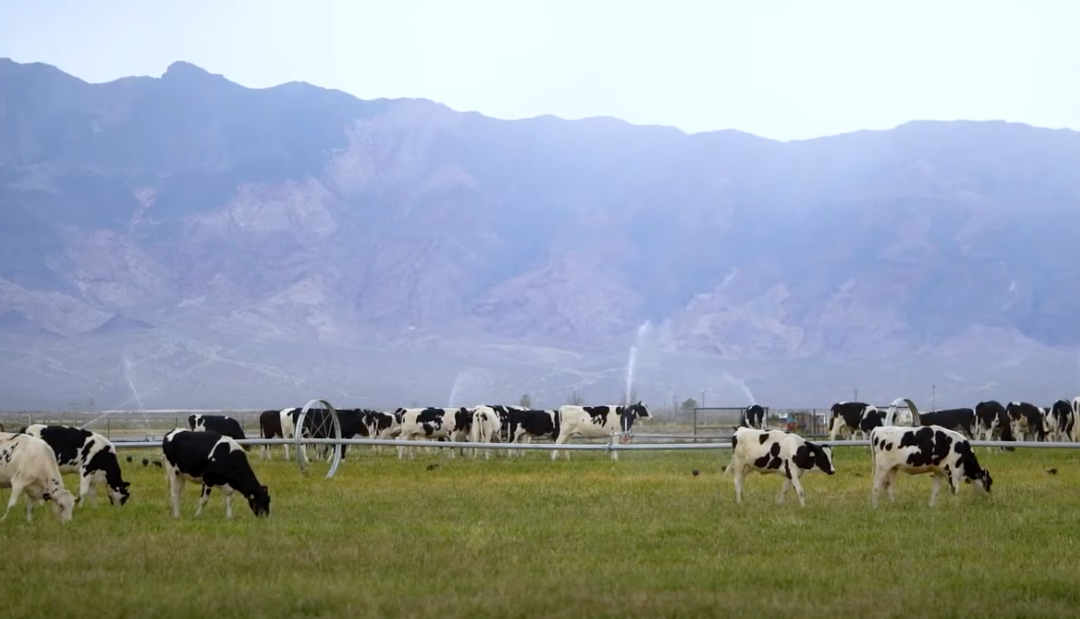 Sustainability on Nevada Dairy Farms